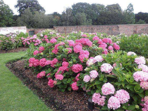 Latest photos of the Hydrangea Garden