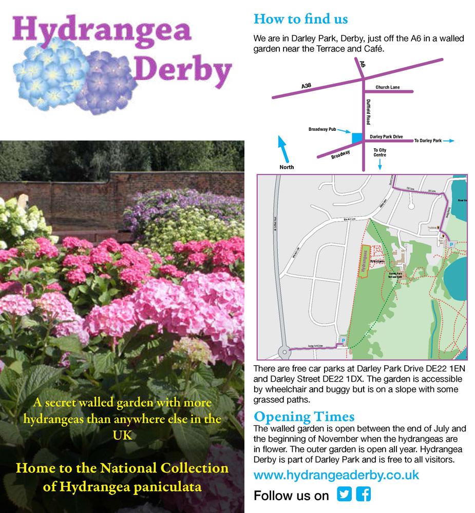 Hydrangea Derby Crowdfund