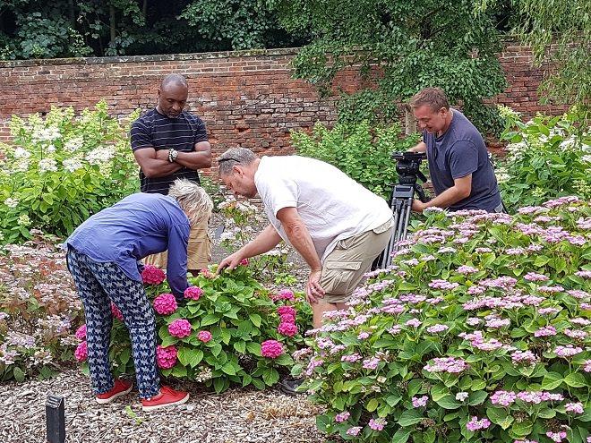 Hydrangea Derby on Gardeners' World